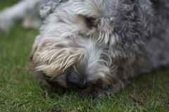 Dog. A head of a dog Stock Images