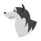 Dog head alaskan malamute Stock Images