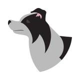 Dog head border collie Royalty Free Stock Image
