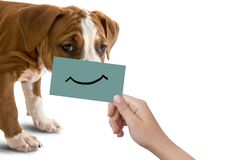 Dog portrait with happy smile on cardboard, isolated on white background. Dog head close-up and female hand with cardboard with a painted smile on it. Concept Royalty Free Stock Photo