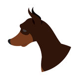 Dog head doberman pincher Royalty Free Stock Images