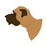 Dog head english mastiff Stock Images