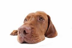 Dog head extreme closeup Stock Photos