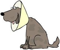 Dog With Head Gear Stock Photos
