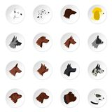 Dog head icons set, flat style. Dog head icons set. Flat illustration of 16 dog head vector icons for web royalty free illustration