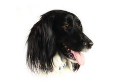 Dog head isolated on white Stock Photo