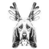 Dog head parade Basset hound sketch vector graphics Royalty Free Stock Photos