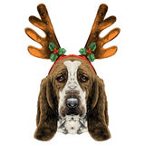 Dog head parade Basset hound sketch vector graphics Royalty Free Stock Photography
