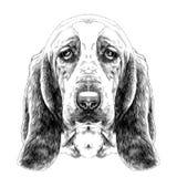 Dog head parade Basset hound sketch vector graphics Stock Image