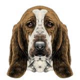 Dog head parade Basset hound sketch vector graphics Stock Photos