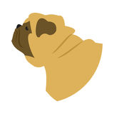 Dog head pug. Animal domestic companion, doggy purebred, vector illustration Stock Photos