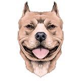 Dog head sketch vector. Dog breed American bulldog head sketch vector graphics black and white drawing stock illustration