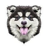 Dog head symmetry sketch vector graphics Stock Photography