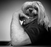 Dog Headed Man. A cool, calm and collected hound dog of a man. This could be your boss or co-worker stock image