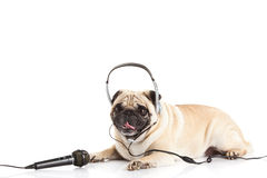 Dog with headphone isolated on white background callcenter. Pug dog with headphone isolated on white background job in callcenter concept worker pet domestic royalty free stock photos
