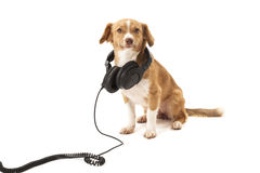 Dog with headphone Royalty Free Stock Photos