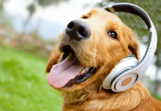 Dog with headphones Stock Photo