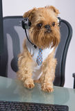 Dog in the headphones with microphone Royalty Free Stock Photography