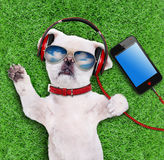 Dog headphones wearing sunglasses relaxing in the grass. Royalty Free Stock Image