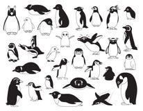 Macaroni Penguin Stock Illustrations 20 Macaroni Penguin Stock