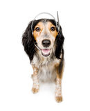 Dog with headset Royalty Free Stock Images