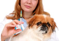 Dog healthcare. Royalty Free Stock Images