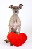 Dog with heart Royalty Free Stock Photos