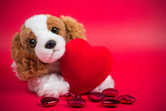 Dog and heart Stock Images