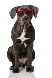 Dog with heart glasses Royalty Free Stock Photos