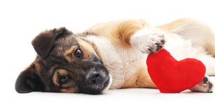 Dog with heart. Stock Photos