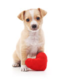 Dog with heart. Royalty Free Stock Photo