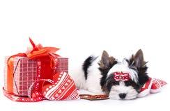 Dog and hearts Stock Photo