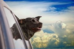 Dog Heaven. Happy dog going for a car ride in the clouds Royalty Free Stock Photography