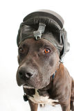 Dog in the helmet Royalty Free Stock Images