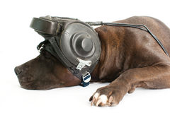 Dog in the helmet Royalty Free Stock Image