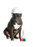 Dog in the helmet Royalty Free Stock Photography