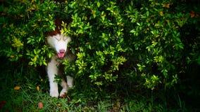 Dog hide Royalty Free Stock Image