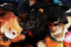Free Dog Hiden On Toys Stock Photo - 84700200
