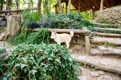 The dog hides behind a bush stock photo