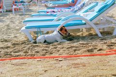 The dog hides in the shade of a lounger on a Turkish beach Stock Photos