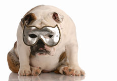 Dog hiding behind mask Royalty Free Stock Photography