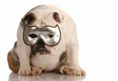 Dog hiding behind mask royalty free stock photography