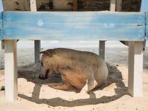 Dog hiding from sunshine Royalty Free Stock Image