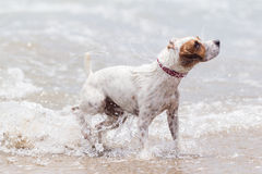 Dog High Speed Action Stock Image