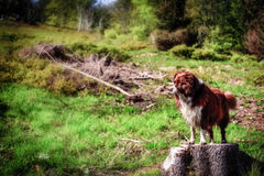 Dog on a Hike at Feldberg Mountain in Spring Royalty Free Stock Images