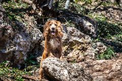Dog on a hike in the mountains Royalty Free Stock Images