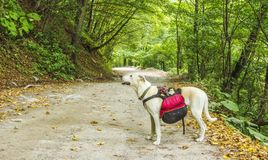Dog hiker. On a mountain dirt road Stock Photos