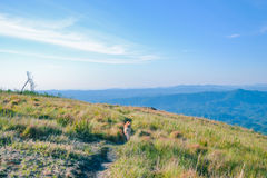 Dog hiking at mountains Stock Photo