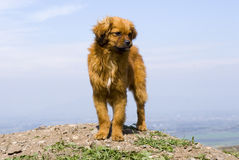 Dog on the hill Stock Image