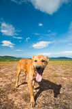 Dog on the hill with blue sky Royalty Free Stock Image